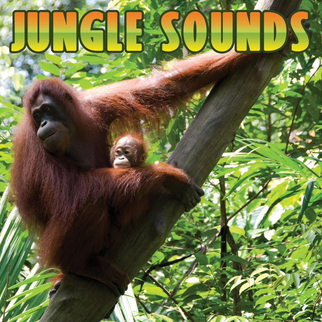 Junge Sounds Non-Stop Mix by Sound Effects - Pandora